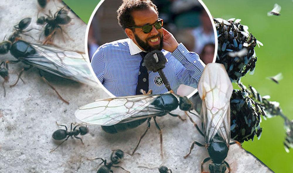 Атака живых туч: куда летят шестикрылые?
