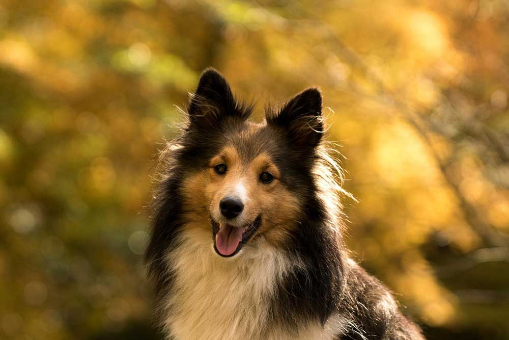 Самые британские породы собак