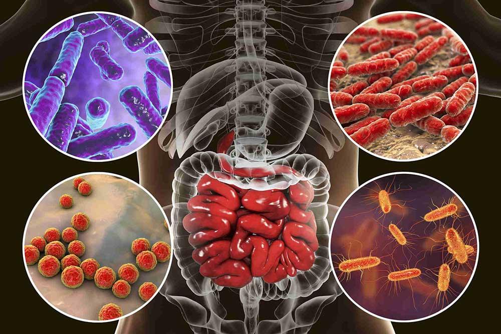 Психобиом: как бактерии меняют наше сознание?