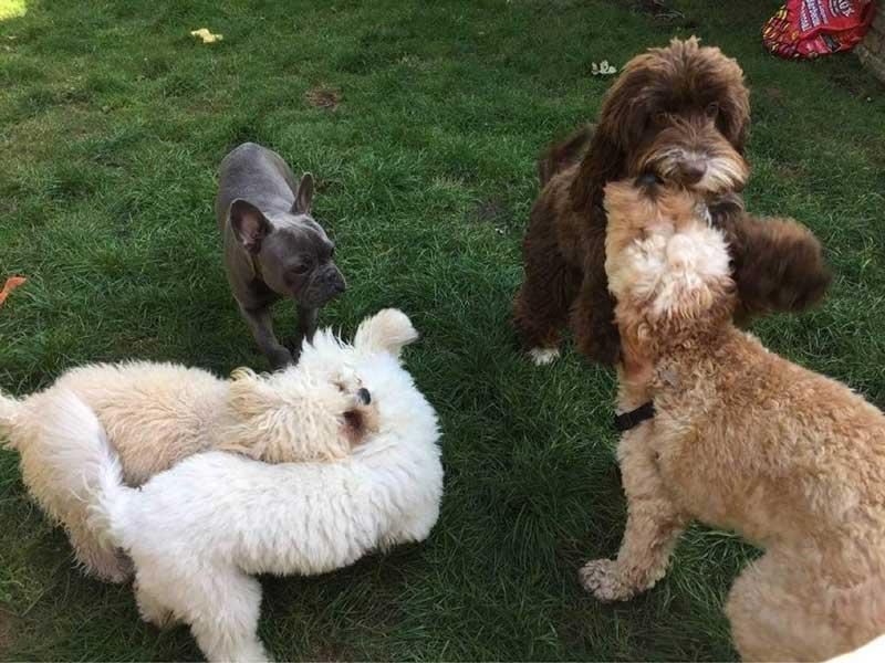 London Best Dog's Kindergarten: собака довольная, уставшая, счастливая